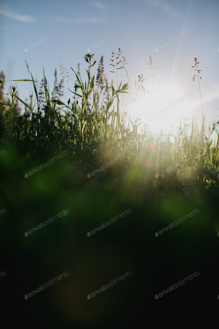 Beautiful fresh green grass in sunlight closeup. Spring or summer morning in meadow. Calm scene