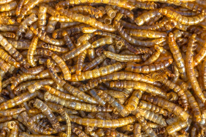 Dried mealworm larvae background