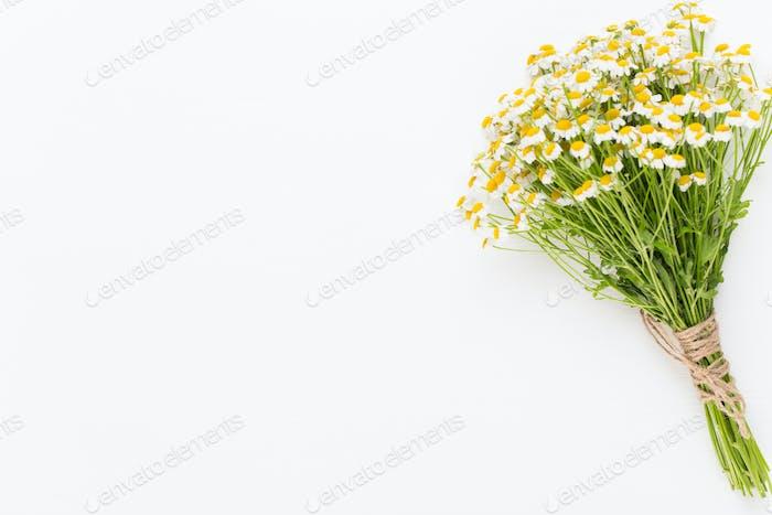 Manzanilla aromaterapia Tema, cosmética hecha a mano. Espacio para textoflores esenciales y medicinales hierbas