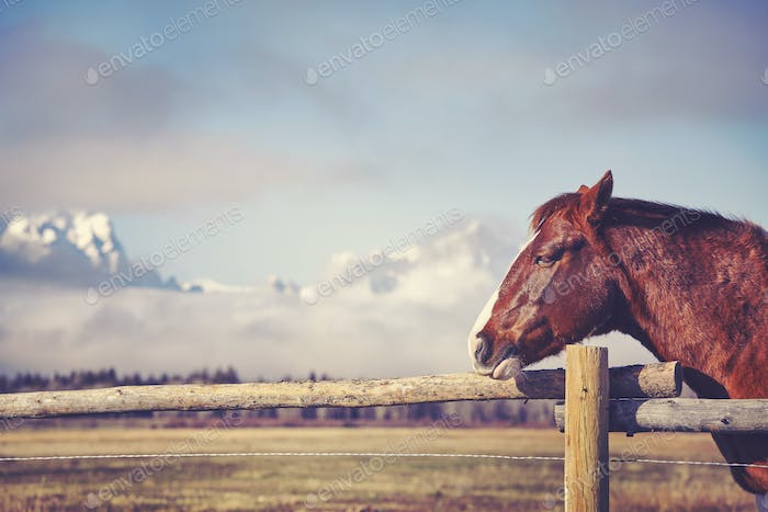 Vintage toned portrait of a chestnut horse, space for text, Wyom