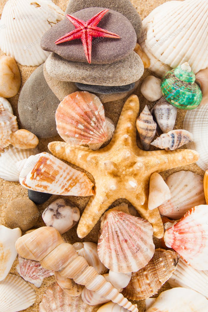 Summer background.  Sea shells with sand as background