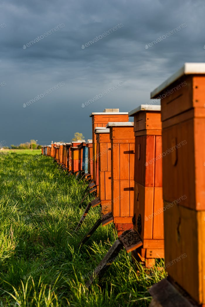 Traditional Wooden Beehives in Fields. Beekeeping and Honey Production. Organic Food Farming