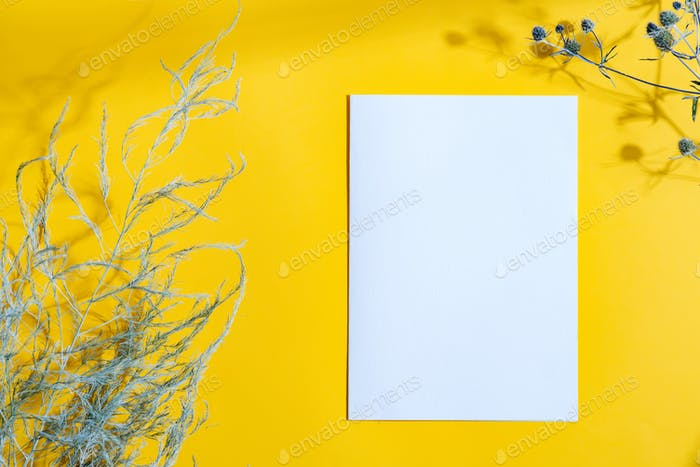 Decorative frame with dry plants and mock up paper card