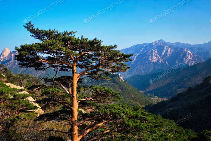 Tree in Seoraksan National Park, South Korea