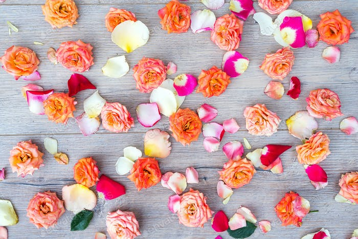 Roses and petals background. Roses and petals scattered on wooden gray background, overhead view