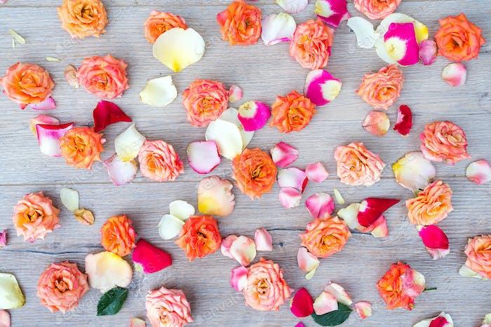 Rosen und Blütenblätter Hintergrund. Rosen und Blütenblätter auf hölzernen grauen Hintergrund verstreut, über den Kopf