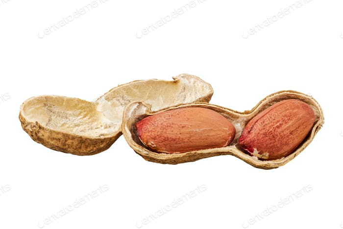 Peanuts (Arachis hypogaea) on a white background