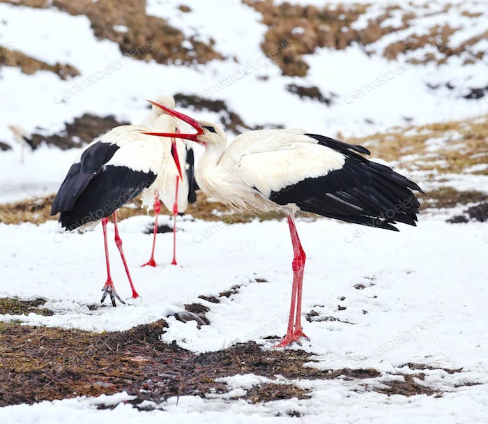 Beautiful storks at the park outdoors