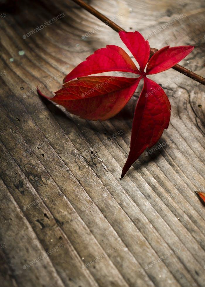 Hiedra roja