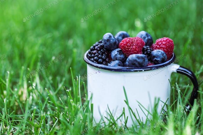 Summer berry fruits in green grass background