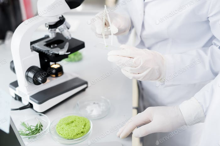 Microbiologists taking probe of green vegetable