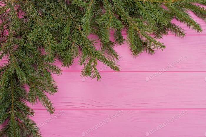 Fresh spruce branches as a corner ornament.