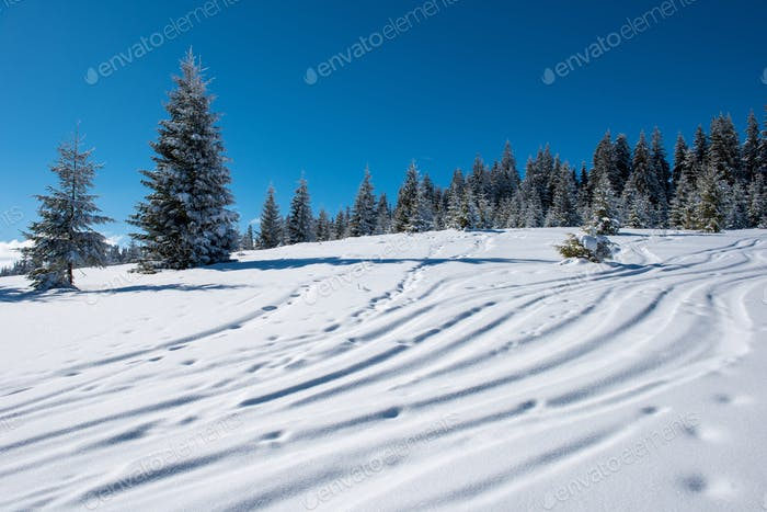 Free ride ski and snowboard tracks in powder snow