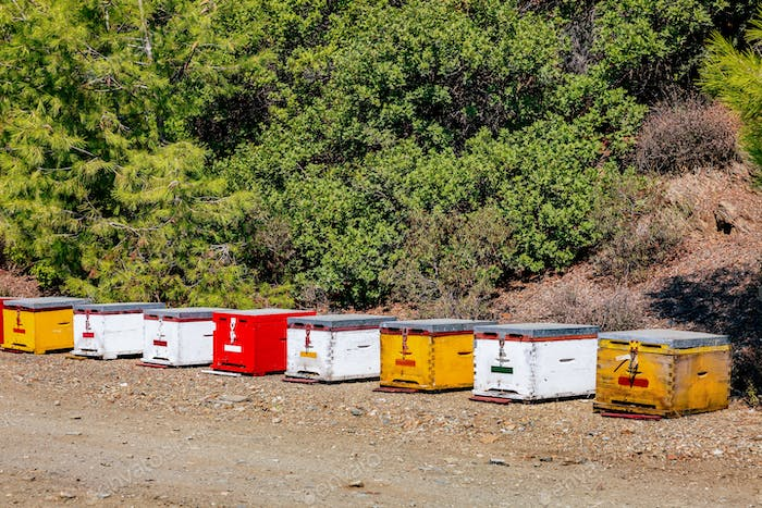 A row of wooden colorful bee hives in summertime