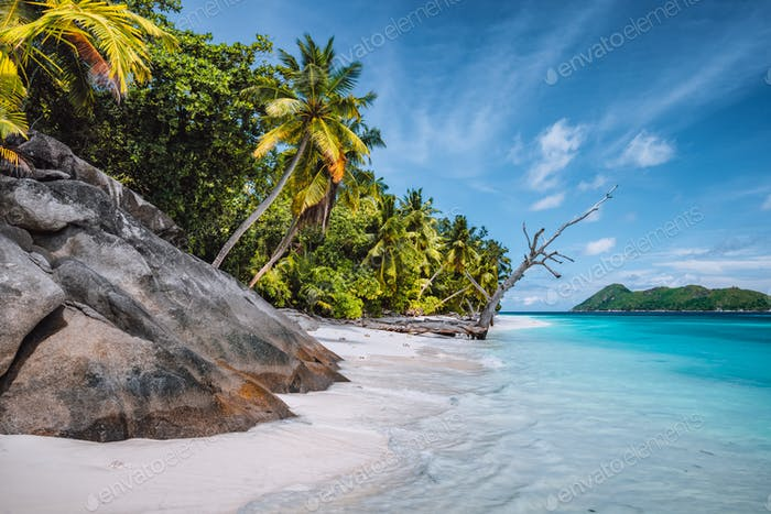 Daytrip to Therese Island. Mahe, Seychelles Coconut palm trees on tropical secluded sandy beach