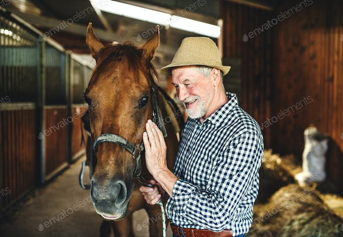 A senior man with a hat standing close to a horse in a stable, holding it.