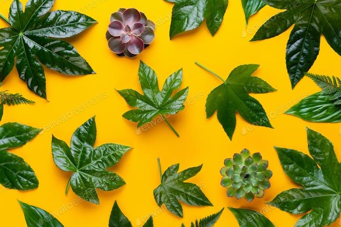 Зеленое растение на желтом фоне. Ретро винтажный стиль.