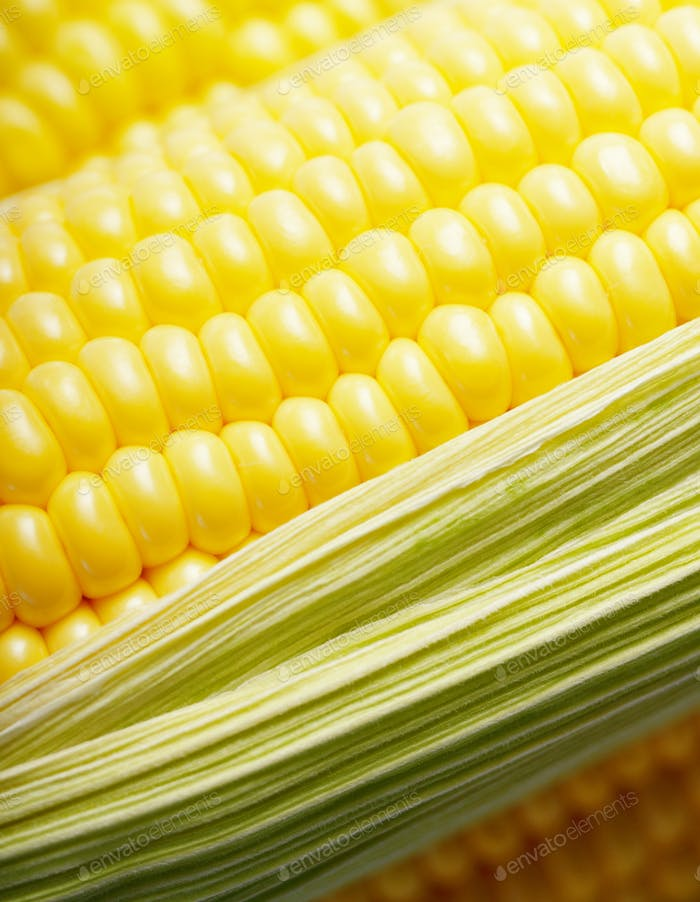 Ripe fresh organic sweet corncob with leaf closeup background
