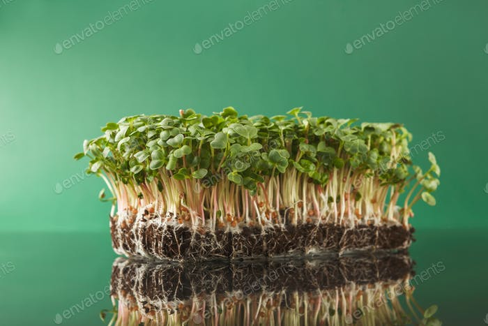 Organic growing micro greens