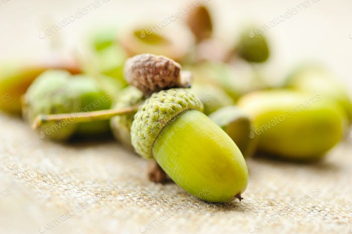 Acorns on sacking