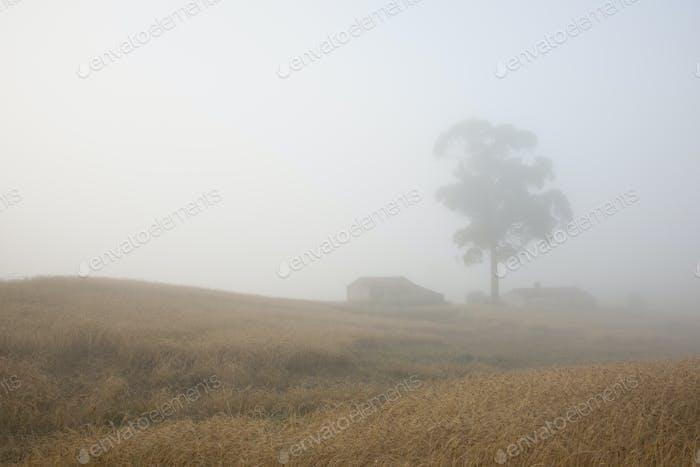 Ein hoher Baum im Nebel der Morgendämmerung in der Landschaft um Sonega.