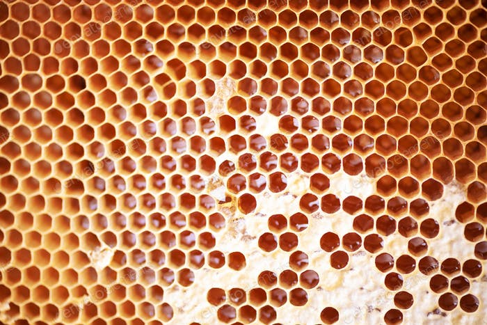 Honeycomb with cells full of fresh honey. Macro photography.