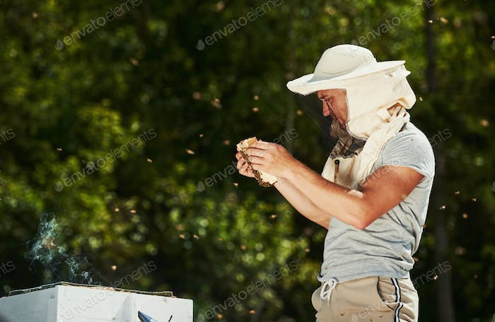 Green trees behind. Beekeeper works with honeycomb full of bees outdoors at sunny day