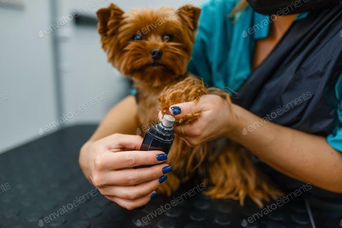 Female groomer polishing the claws of cute dog
