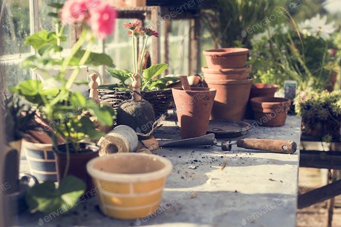 Gartenarbeit Kultivieren Wachstum Sämling Pflanzen Konzept