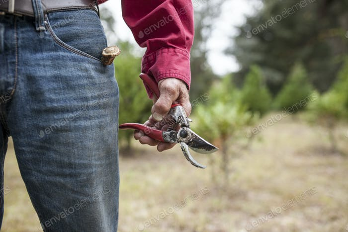 weathere hands holding pruning shears
