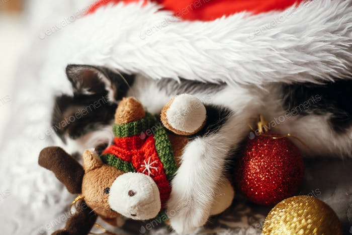Cute kitty sleeping in santa hat with reindeer toy on bed with gold and red christmas baubles