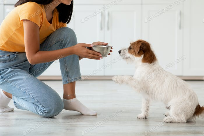 Fluffy dog waiting for food, unrecognizable woman feeding pet