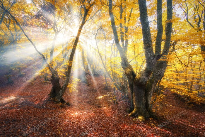 Magical autumn forest with sun rays
