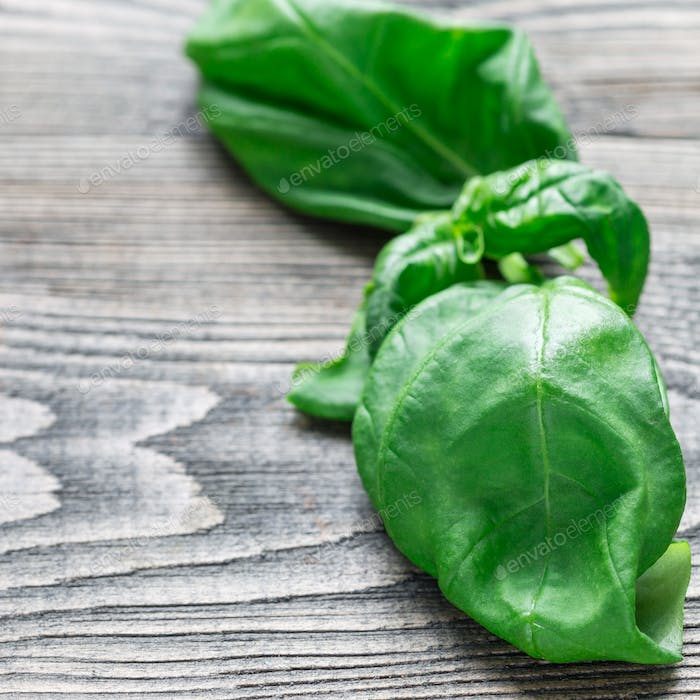 Fresh basil leaves on gray wooden background, copy space, square
