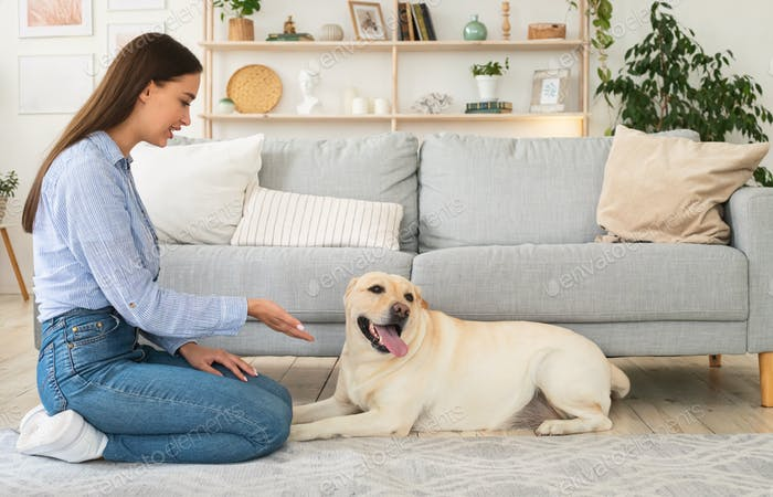 Beautiful woman teaching her dog in the living room