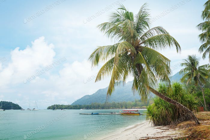 Tropical beach with palms and bright sand