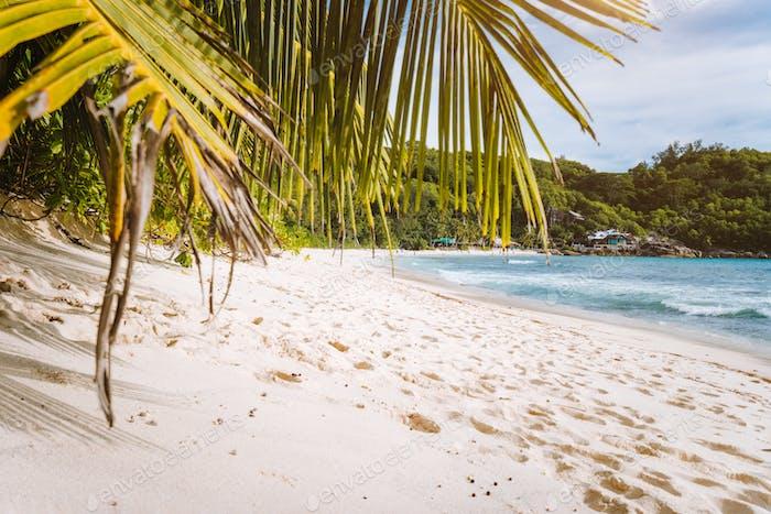 Weißer Sandstrand mit Kokospalmen auf tropischer Insel, Anse Takamaka Strand, Seychellen