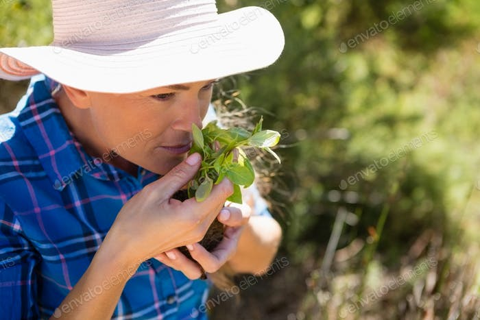 Woman smelling sapling in garden