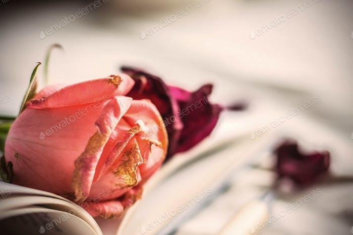 Rose der Erinnerungen.