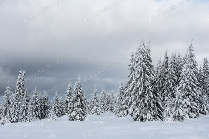 Christmas and New Year background with winter trees in the mountains covered with snow
