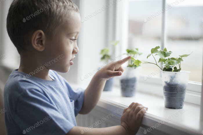 A young boy looking at young plants in pots growing on a windowsill.