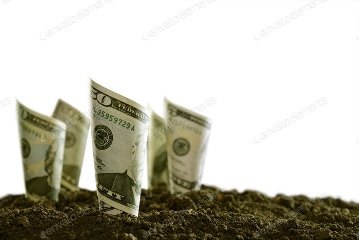 Rolled bank notes on soil