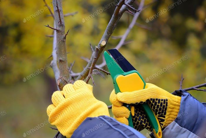 Hände mit Handschuhen Gärtner Wartungsarbeiten, Beschneiden tr
