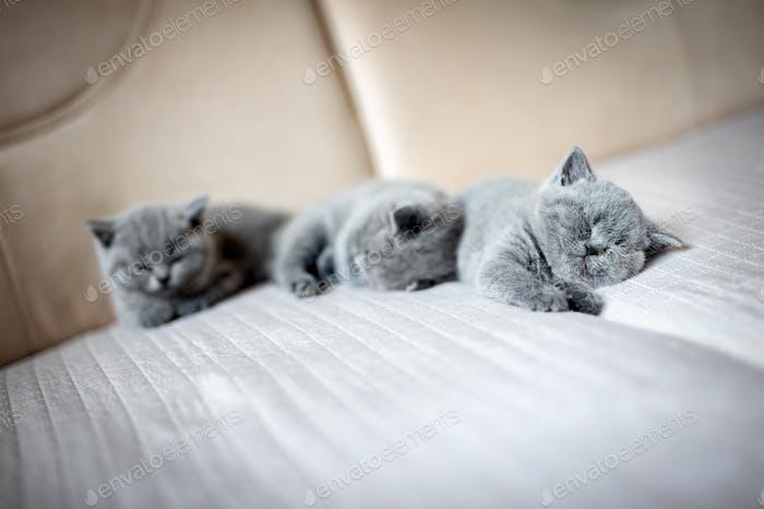Niedliche Kätzchen liegen auf einer Couch.