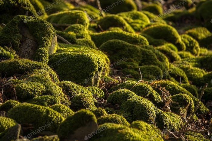 Mossy Rocks Detail