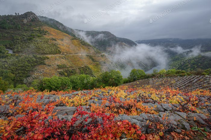 Reddish Colors in the Vineyards and Gray Clouds in the Autumn