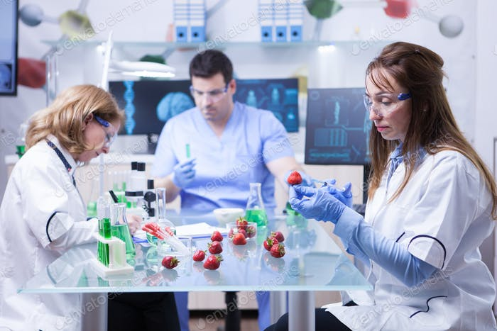 Team of reseach scientist in a lab doing analysis on strawberries