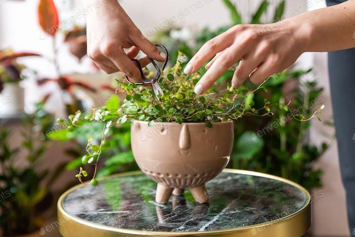 Florist Pflege einer Pflanze