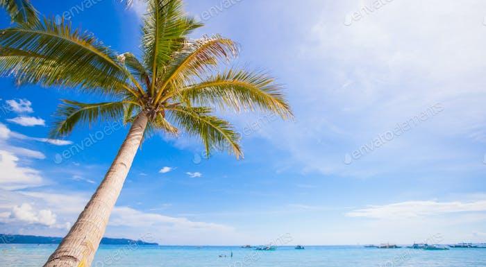Kokospalme am Sandstrand Hintergrund blauer Himmel