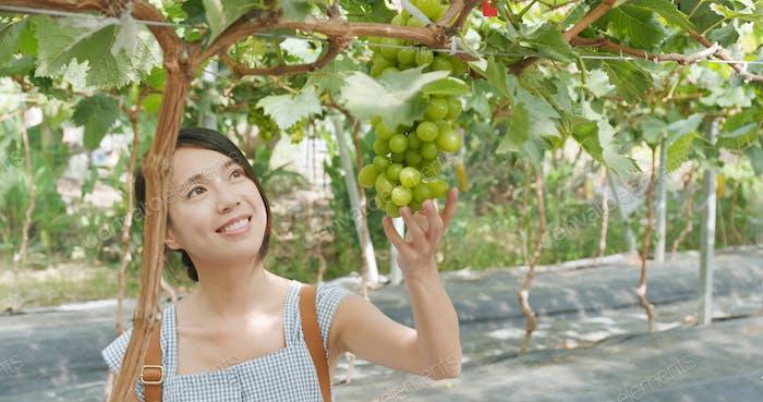 Young woman visit green grape farm
